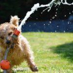 Dog Garden Terrier Fun